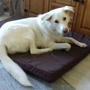 Linas Hundebett