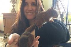 Wilde Hörnchen
